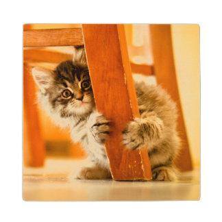 Kitty Holding Chair Leg Wood Coaster