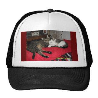 kitty hugs cap