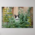 Kitty_In_Catnip Poster