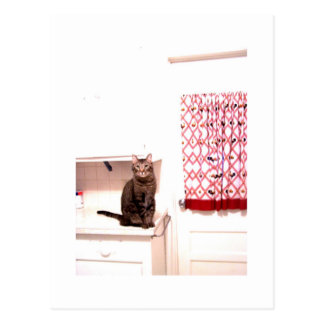 kitty in kitchen postcard