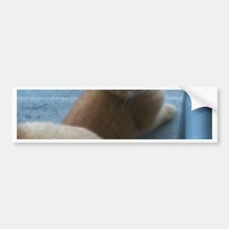 Kitty Kat iPhone 4 Case Bumper Sticker