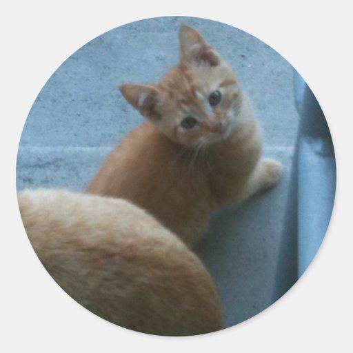 Kitty Kat iPhone 4 Case Round Stickers