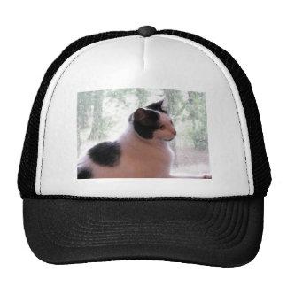 Kitty Kitty Hat