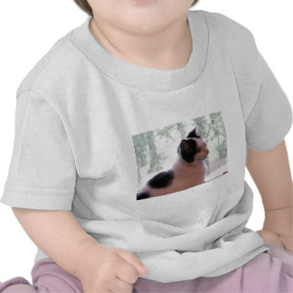 Kitty Kitty Tshirts
