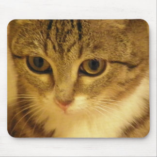 kitty mouse mat