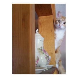 kitty on shelf postcard