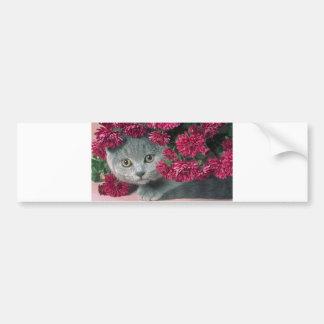 Kitty-Peek-A-Boo Bumper Sticker