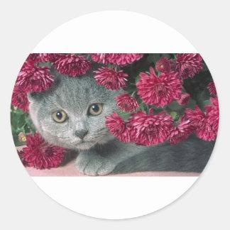 Kitty-Peek-A-Boo Round Sticker
