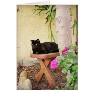 Kitty resting on bench card