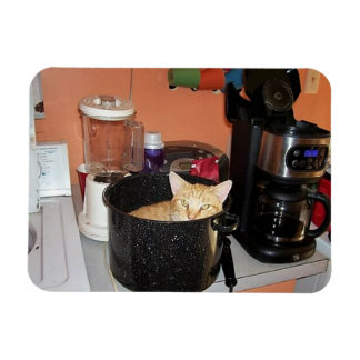Kitty Stew Rectangular Photo Magnet