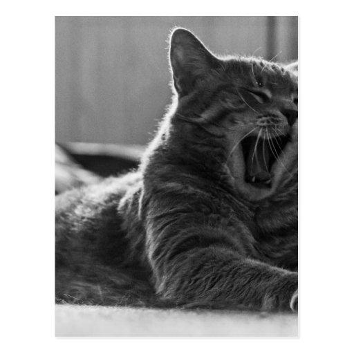Kitty Yawning Postcard