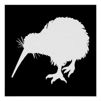 Kiwi Bird Poster