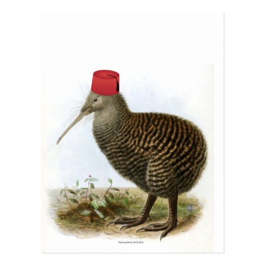 Kiwi Bird Wearing Fez Absurd Vintage Postcard