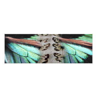 """Kiwi Lifestyle"" - Butterfly Dream Photo ART"