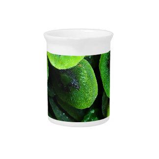 Kiwi slices pitcher