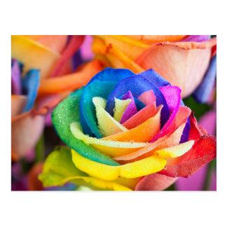 kleuren bloem wens kaarten