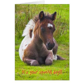 Kneeling Dartmoor Pony Foal birthday card