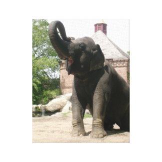 Kneeling Elephant Gallery Wrapped Canvas