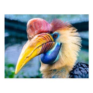 Knobbed Hornbill Postcard