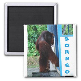 Knock Knock Neighborhood Friends Borneo Square Magnet