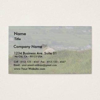 Knocknara Ireland Sheep Lambs Business Card
