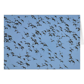 Knots flying blank greeting card