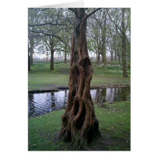 Knotted Yew Tree Trunk Greeting Card