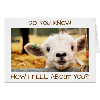 """KNOW HOW I FEEL ABOUT YOU? """"I LOVE YOU"""" SAYS LAMB CARD"""