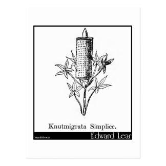Knutmigrata Simplice. Postcard