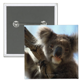 koala 15 cm square badge