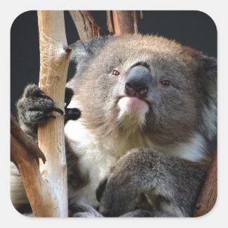 Koala 1 square sticker