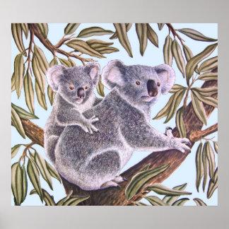Koala and baby in Eucalyptus Tree Poster