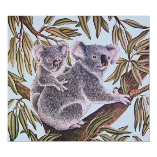 Koala and baby in Eucalyptus Tree Poster