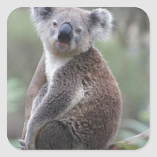 Koala Animal Square Stickers