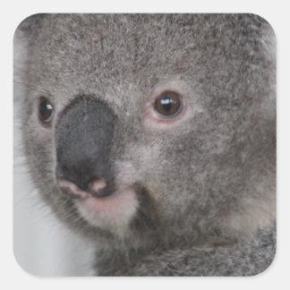 Koala Baby Square Stickers