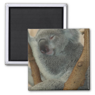 Koala Bear Aussi Safari Peace Love Nature Destiny Magnets