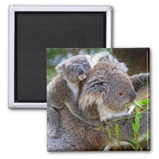 Koala Bear Aussi Safari Peace Love Nature Destiny Magnet