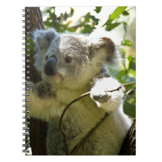 Koala Bear Aussi Safari Peace Love Nature Destiny Spiral Notebook