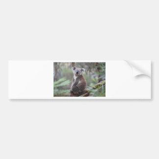 koala bear Aussie outback bush tree forest climb Bumper Sticker