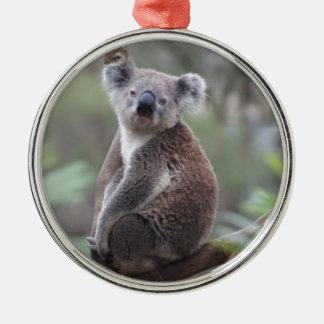 koala bear Aussie outback bush tree forest climb Christmas Ornament