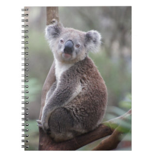 koala bear Aussie outback bush tree forest climb Notebook
