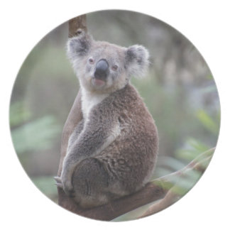 koala bear Aussie outback bush tree forest climb Plate
