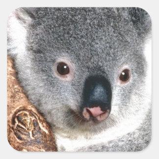 Koala Bear Australia Outback Country Animal Cute Square Sticker