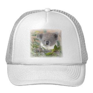 Koala Bear Baseball Hat