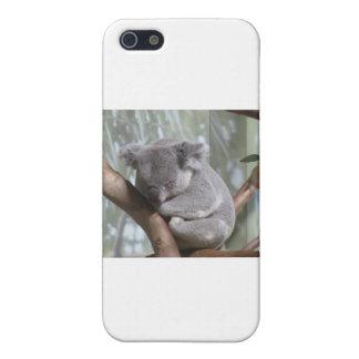 koala bear cover for iPhone 5/5S