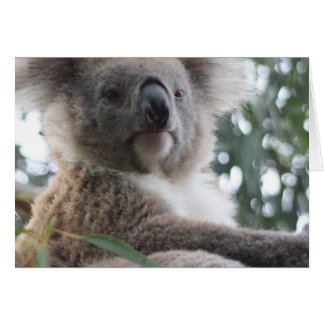 Koala Bear Facts Greeting Cards
