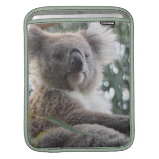 Koala Bear Facts iPad Sleeve