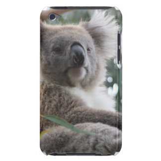 Koala Bear Facts iTouch Case Barely There iPod Case