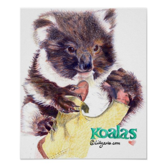 Koala Bear Fine Art Print and Poster