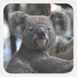 Koala Bear in Tree Square Sticker
